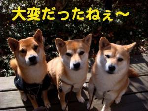 1_20081219002120.jpg
