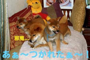 1_20081220024835.jpg