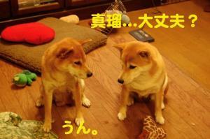 1_20081222174111.jpg