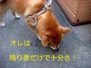 1_20081231001513.jpg