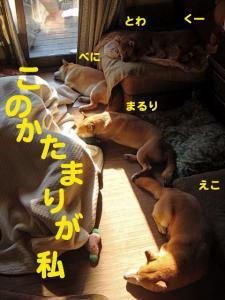 1_20090114003146.jpg