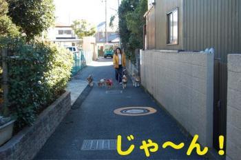 1_20090125180259.jpg