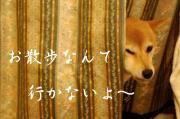 1_20090218173910.jpg