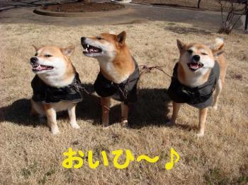 1_20090315201741.jpg