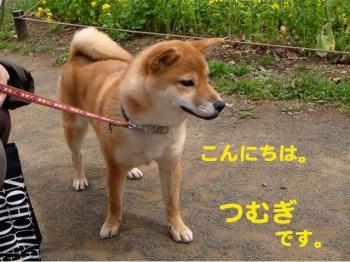 1_20090328222525.jpg