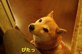 1_20090410192256.jpg