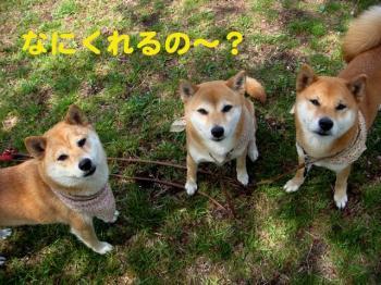 1_20090419234527.jpg
