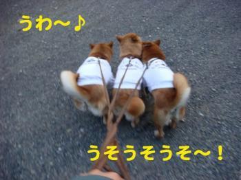 1_20090430190301.jpg