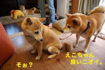 1_20090526213632.jpg