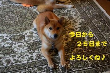 1_20090621234347.jpg