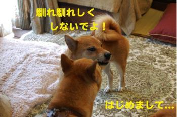 1_20090705194611.jpg
