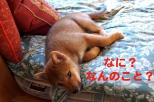 2_20081221181733.jpg