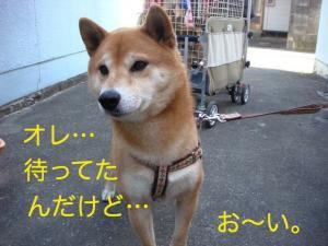 2_20081230235948.jpg