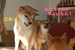 2_20090110223518.jpg