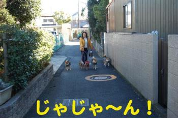 2_20090125180316.jpg