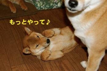 2_20090203000801.jpg