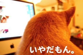 2_20090203214521.jpg