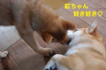 2_20090216181037.jpg