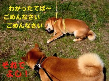 2_20090404212844.jpg