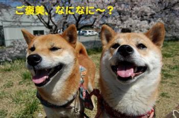 2_20090408180309.jpg