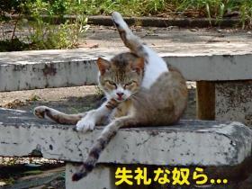 2_20090525180026.jpg