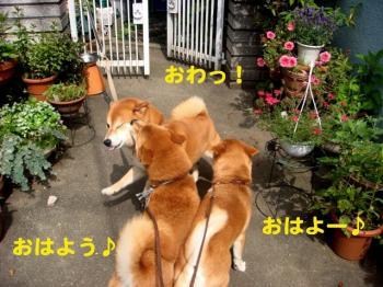2_20090619235930.jpg
