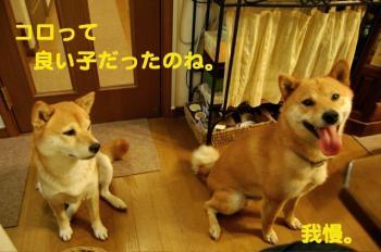 2_20090715031201.jpg