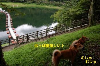 2_20090729235604.jpg