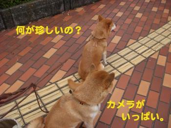2_20090809213419.jpg