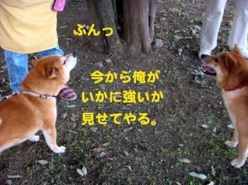 2_20090822235643.jpg