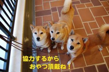 2_20090827004440.jpg