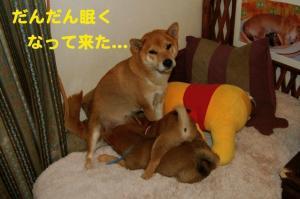 3_20081219004202.jpg