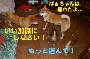 3_20081220024518.jpg