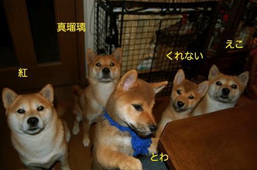 3_20081231190532.jpg