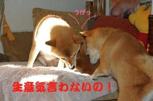 3_20090110223540.jpg