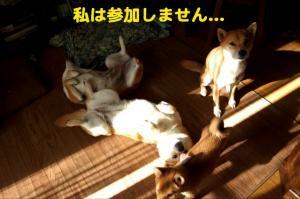 3_20090117223327.jpg