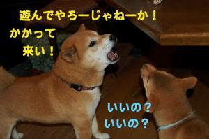 3_20090118190750.jpg