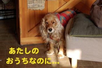 3_20090129023038.jpg