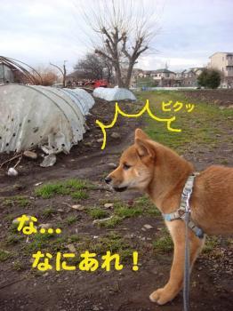 3_20090131223607.jpg