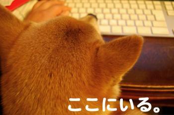 3_20090203214603.jpg