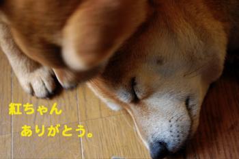 3_20090214031351.jpg