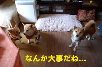 3_20090322014048.jpg