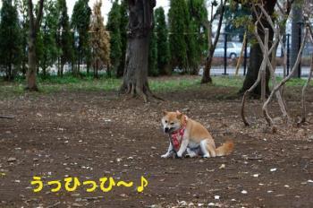 3_20090326173244.jpg