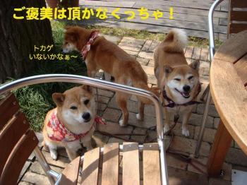 3_20090413222030.jpg