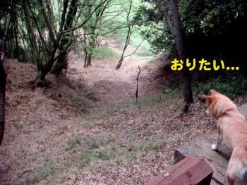 3_20090425193203.jpg
