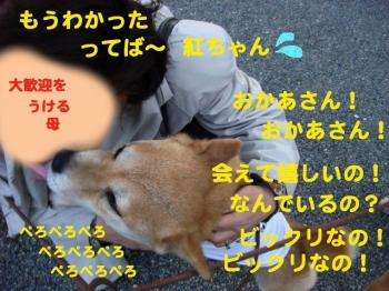 3_20090430190705.jpg