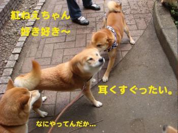 3_20090511212849.jpg