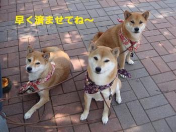 3_20090521200648.jpg