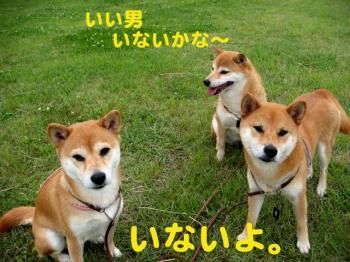 3_20090603222708.jpg