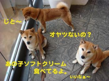 3_20090703201419.jpg